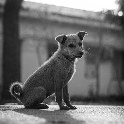 FUNDACION-RESPONSABILIDAD-SOCIAL-EMPRESARIAL-BRAINIAK-perros